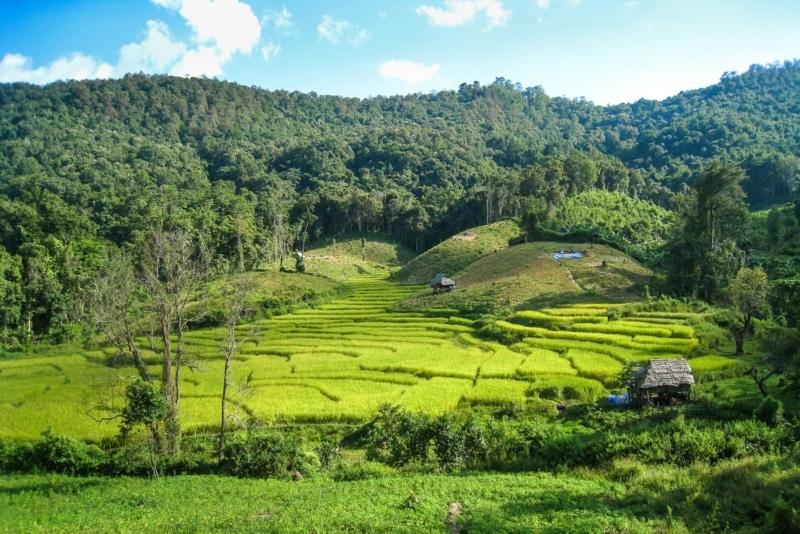 Trekking through the rice fields of northern Thailand