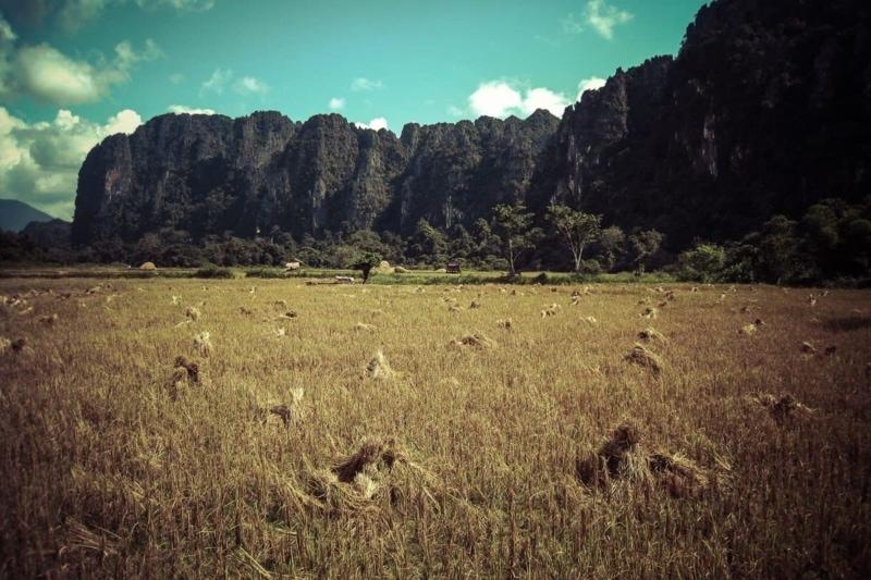 Rice fields of Laos