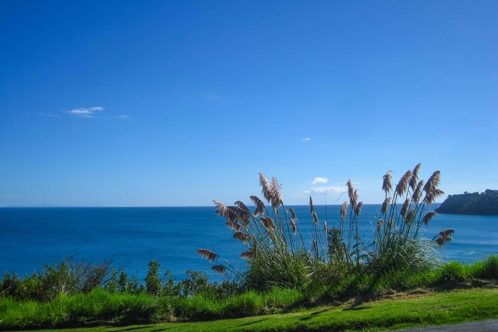 Traveling the world. Waiheke Island, New Zealand.