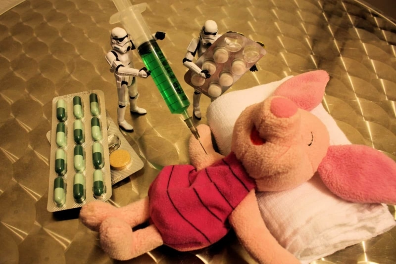 Piglet Gets Vaccinated