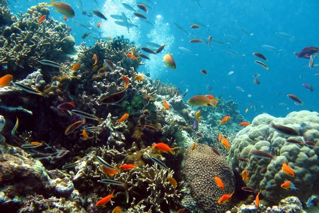 Scuba diving in Australia