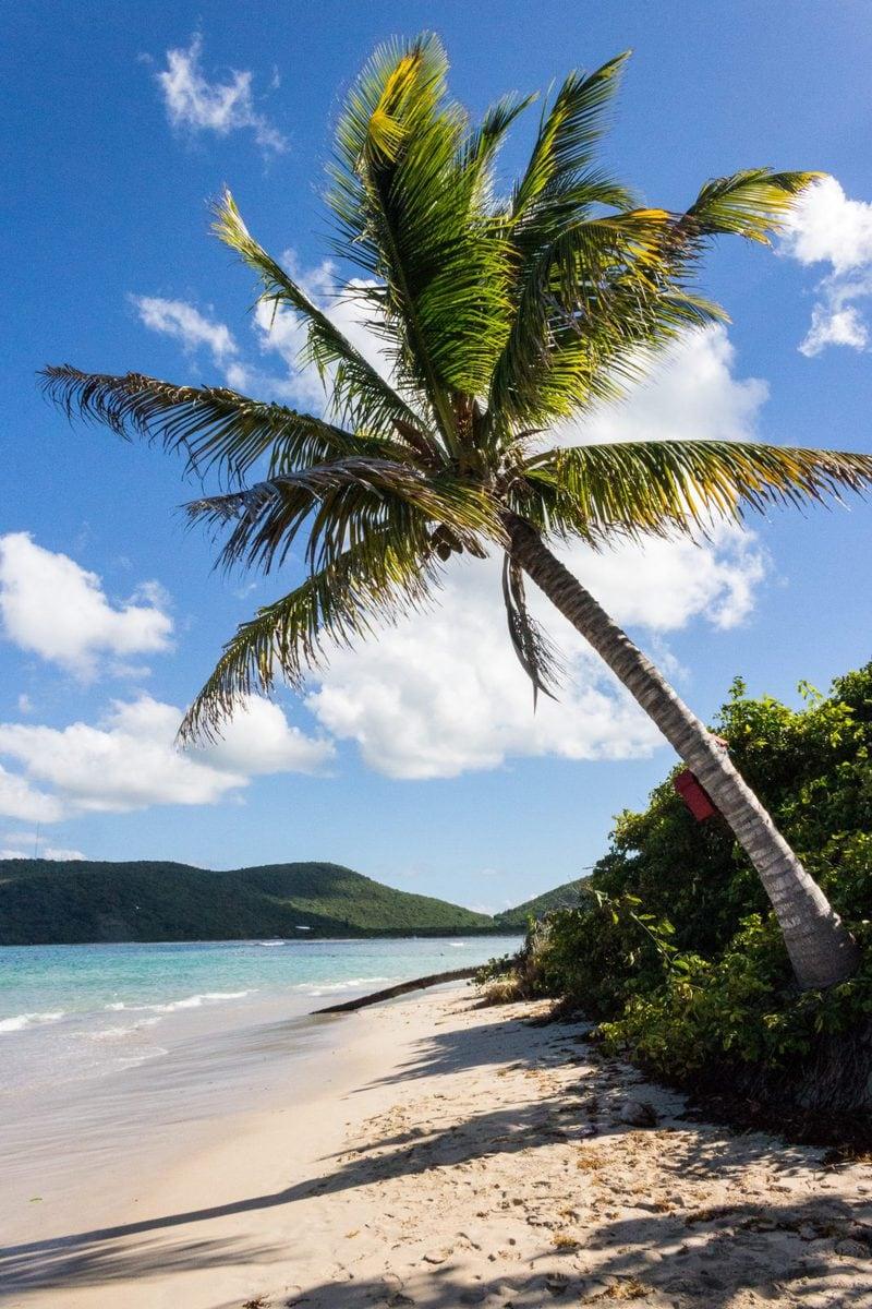 Palm Tree, Culebra