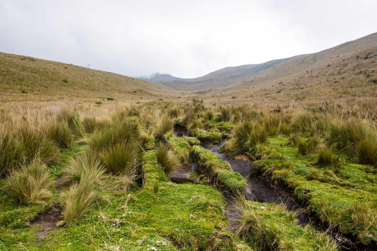 Grassy ruts at the beginning of the hike up Pichincha