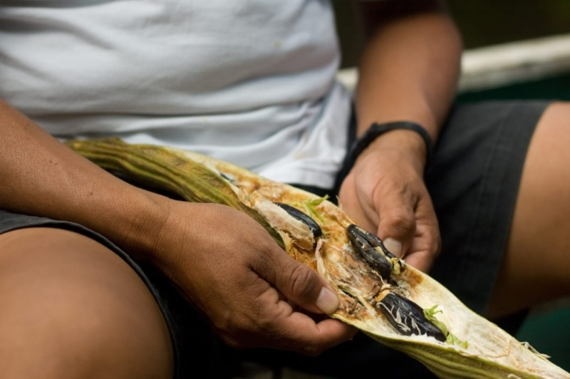 A rare fruit, the Costa Rican Guaba