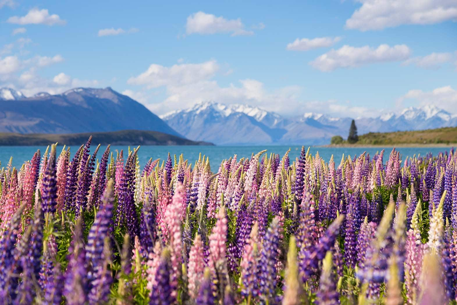 How to Immigrate to New Zealand: A Complete Guide to the New Zealand Immigration Process