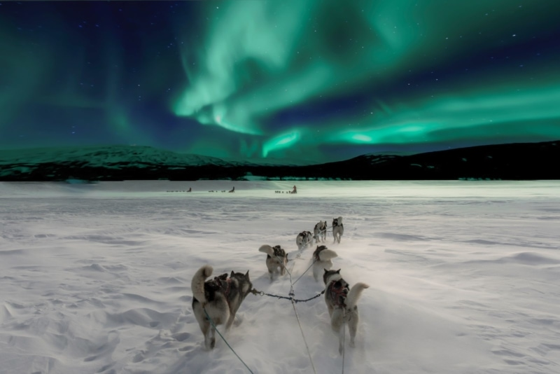 Husky sledding in Norway beneath the Northern Lights. How's that for a summer getaway?