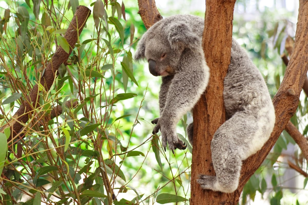 Your Ultimate Guide to Spending One Year in Australia on a Working Holiday Visa