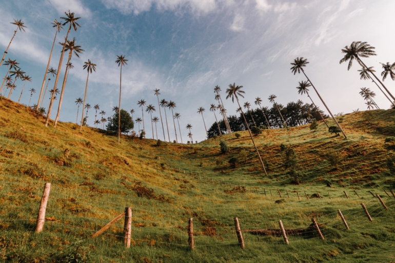 The Cocora Valley is, hands down, one of the best places to visit in Colombia, bar none.