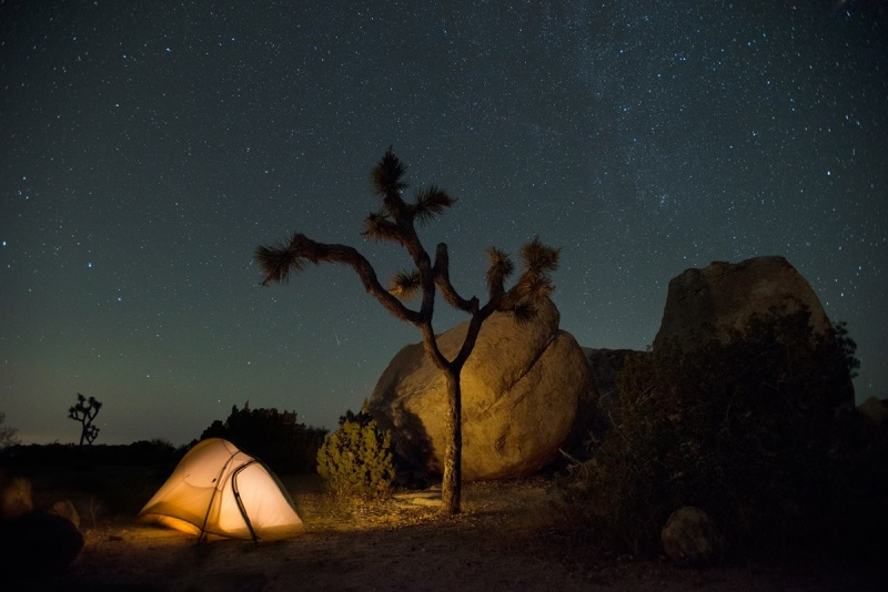 Ryan Campground Joshua Tree