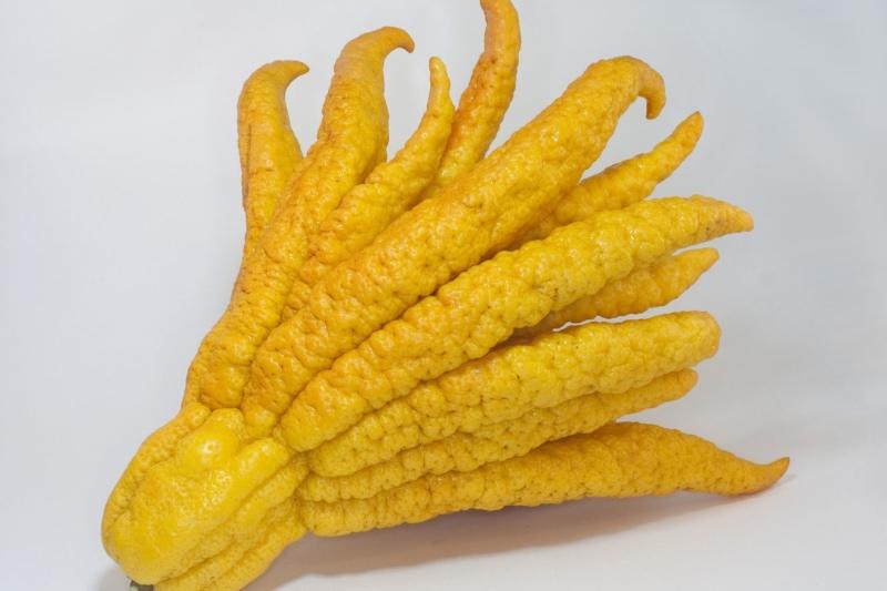 Buddha's Hand exotic fruit