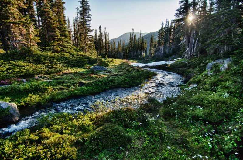 A river running through a forest in Olympic National Park