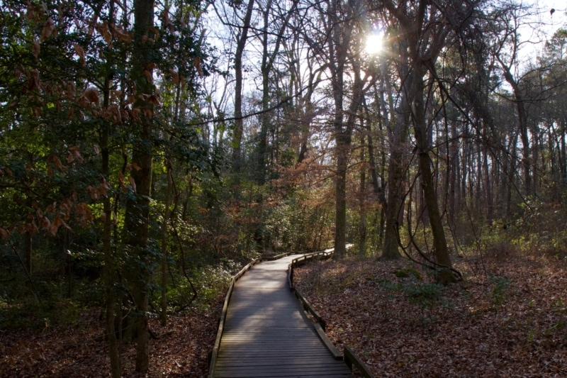 National Parks Road Trip to Congaree National Park