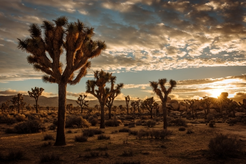 National Parks Road Trip to Joshua Tree National Park