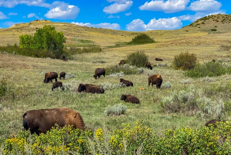 National Parks Road Trip to Theodore Roosevelt National Park